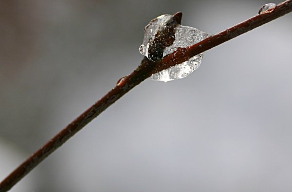 Ice twig, birch, closeup, drop, frozen, ice, icy, nature, snow, thaw, twig, water, winter, photo